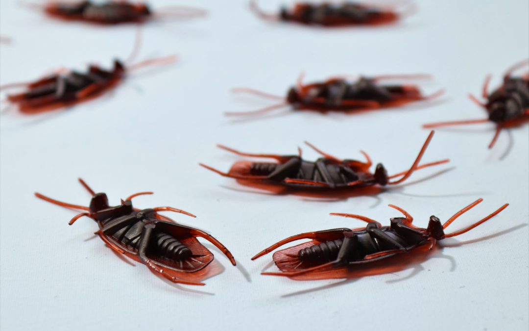 Are Landlords responsible for pest control, apartment pest control